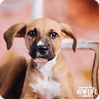 Adopt A Pet :: Babs - Portland, OR