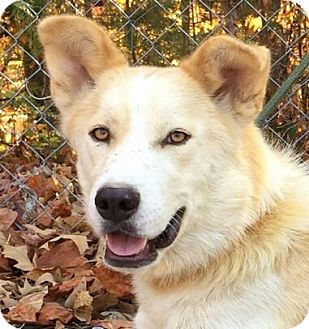 Husky Mix Dog for adoption in Brattleboro, Vermont - Monkey