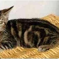 Adopt A Pet :: Tac - Danville, KY