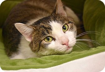 Domestic Shorthair Cat for adoption in Bristol, Connecticut - *Easel*-ADOPTED