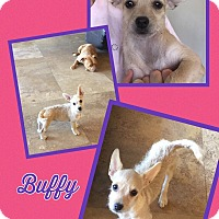 Adopt A Pet :: Buffy - Scottsdale, AZ