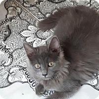 Adopt A Pet :: Sushi MC - Norwalk, CT