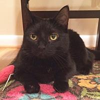 Adopt A Pet :: Zaela - Fairfax, VA