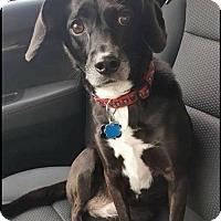 Adopt A Pet :: Lulu - Fairfield, OH