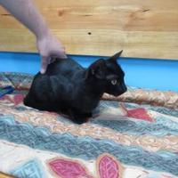 Adopt A Pet :: Spooky - Robinson, IL