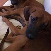 Adopt A Pet :: Otto - Hewitt, NJ