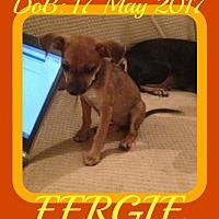 Adopt A Pet :: FERGIE - Sebec, ME