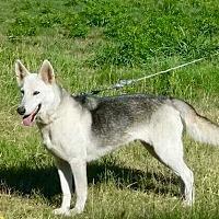 Adopt A Pet :: WINTER - Greeneville, TN