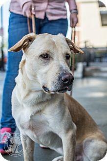 Labrador Retriever Mix Dog for adoption in Cumming, Georgia - Ranger