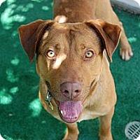 Adopt A Pet :: Rocky - Corona, CA