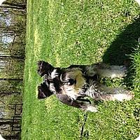 Adopt A Pet :: Maggie - Centerpoint, IN