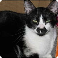 Adopt A Pet :: Paco (lover) - Sterling Hgts, MI