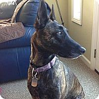 Adopt A Pet :: Kylie in CA - Jamestown, CA
