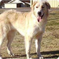 Adopt A Pet :: Dixie -Adopted - Oklahoma City, OK
