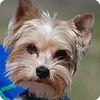 Adopt A Pet :: Bobbie - Providence, RI