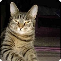Adopt A Pet :: Lilly - Easley, SC