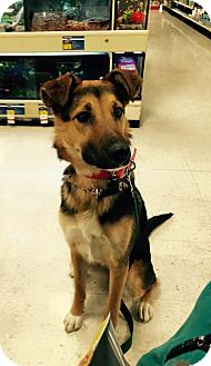 German Shepherd Dog Mix Puppy for adoption in Las Vegas, Nevada - Holly