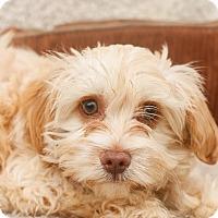 Adopt A Pet :: Benji - Auburn, CA