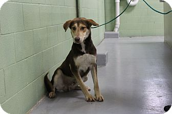 Shepherd (Unknown Type) Mix Dog for adoption in Odessa, Texas - A15 ALLEN
