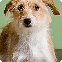 Adopt A Pet :: Reba - Owensboro, KY