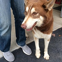 Adopt A Pet :: Tiko - Watha, NC