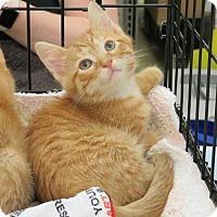 Adopt A Pet :: .Sebastian - Ellicott City, MD