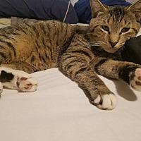 Adopt A Pet :: Toby - Parkton, NC