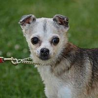 Adopt A Pet :: BENNY - Marina Del Ray, CA