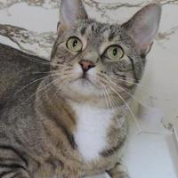 Adopt A Pet :: Sara - Westville, IN