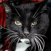 Adopt A Pet :: Kizzy - Atascadero, CA