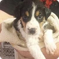 Adopt A Pet :: Kr Litter - Tobin - APPLICATIONS CLOSED - Livonia, MI
