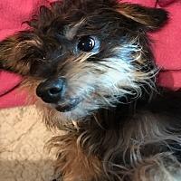 Adopt A Pet :: Axel - Denton, TX