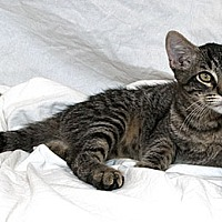 Adopt A Pet :: Rodney M - Sacramento, CA