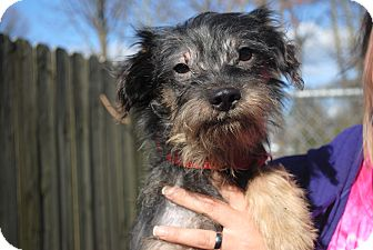 Terrier (Unknown Type, Small) Mix Dog for adoption in Medford, New Jersey - Raul