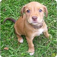 Adopt A Pet :: Merlot - Plainfield, CT