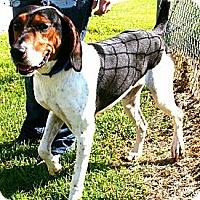 Adopt A Pet :: Rick - shelter hound - Providence, RI