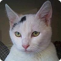 Adopt A Pet :: Gorbie - Modesto, CA