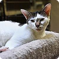 Adopt A Pet :: Freckles - St. Petersburg, FL