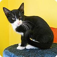 Adopt A Pet :: Bellagio - Mobile, AL