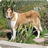 Adopt A Pet :: Barkley - Trabuco Canyon, CA