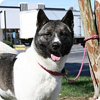 Adopt A Pet :: Kiki - Virginia Beach, VA