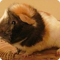 Adopt A Pet :: Ralphie - Williston, FL