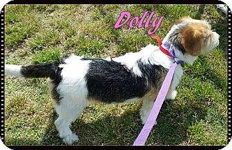 Jack Russell Terrier Mix Dog for adoption in Ahoskie, North Carolina - Dolly