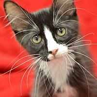 Adopt A Pet :: Ricky  171011 - Atlanta, GA