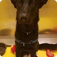 Adopt A Pet :: Maverick - Titusville, FL
