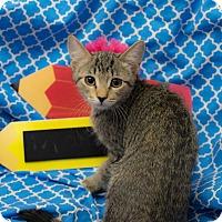 Adopt A Pet :: Monroe - Addison, IL