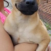 Adopt A Pet :: Opie - Ridgefield, CT