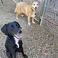 Adopt A Pet :: Memphis - South Bend, IN