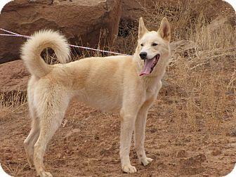 Husky/Shepherd (Unknown Type) Mix Dog for adoption in Roosevelt, Utah - Timber