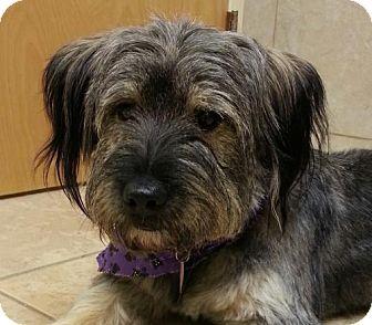 Tibetan Terrier Mix Dog for adoption in Hagerstown, Maryland - Roxanne